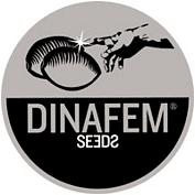 Dina Fem Seeds