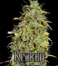Kraken Seeds