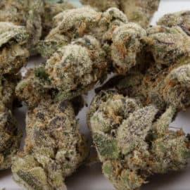 Cookie Kuѕh Seeds