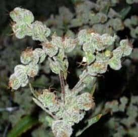 Grinspoon Seeds