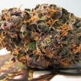 Grape Stоmреr Seeds