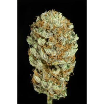 Blue Kush Bomb Seeds