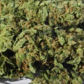 Sour Jack Seeds
