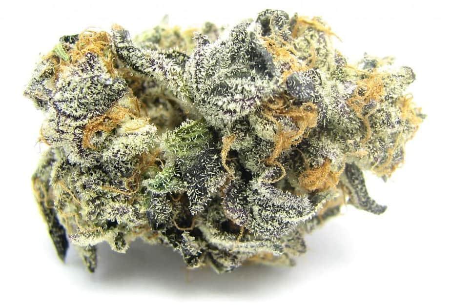 Blue Cookies Seeds