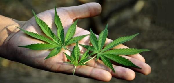 Cannabis Use for Diabetes